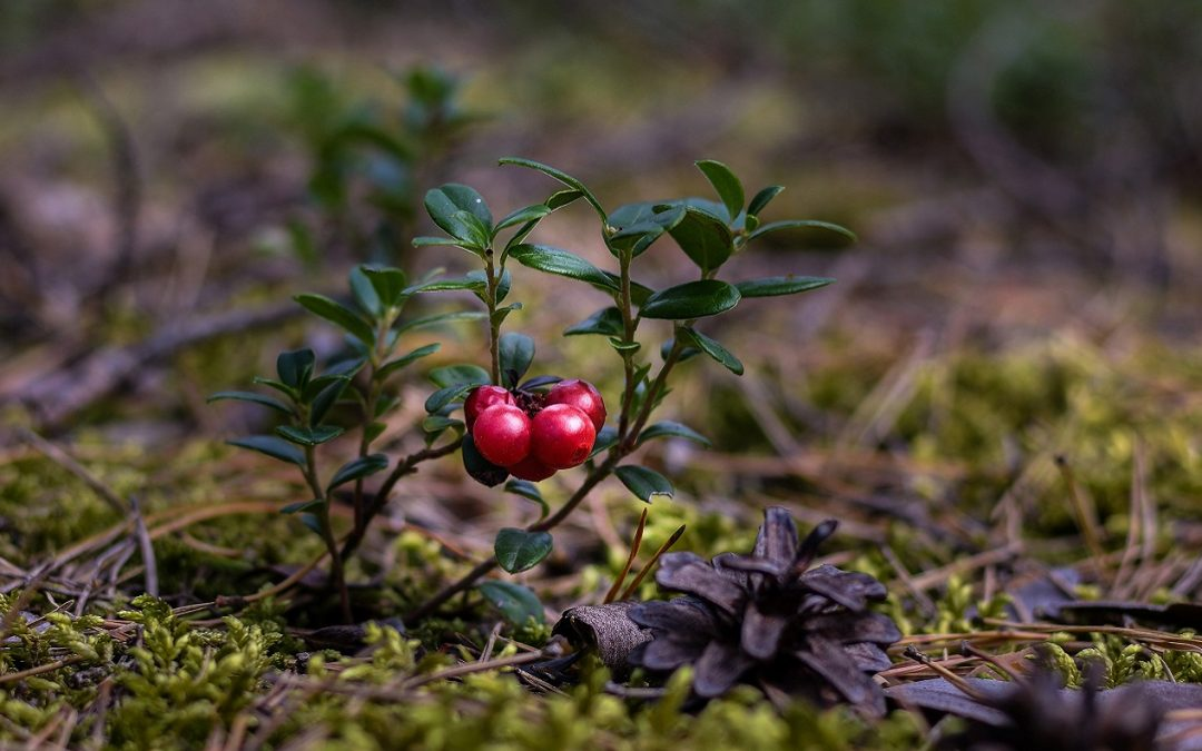 From Classrooms to Cranberries – Evelyn Ernst Discusses Her Career Transition and Trajectory